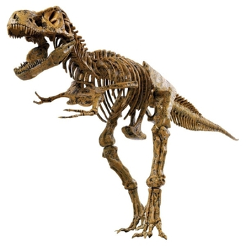 Набор Скелет динозавра, 91 см Edu-Toys