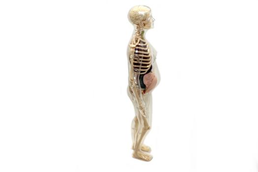 Анатомический набор Edu-Toys